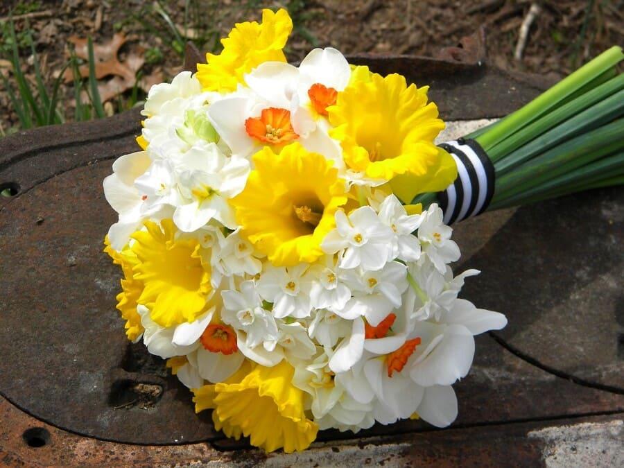 Ý nghĩa của hoa cưới hoa thủy tiên